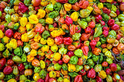 Belize Peppers II Poster