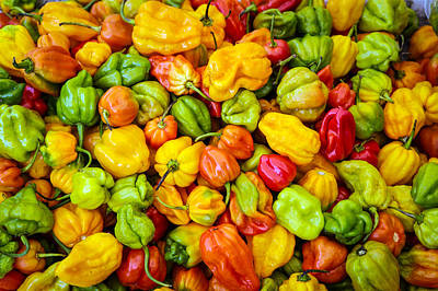 Belize Peppers Poster