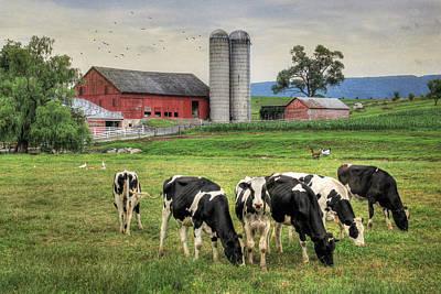 Belleville Cows Poster by Lori Deiter