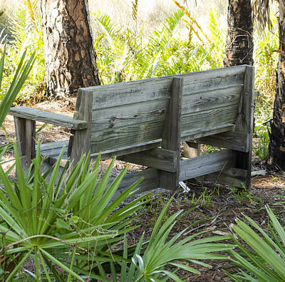 Bench In Nature Poster