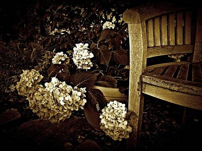 Bench With Hydrangeas Poster