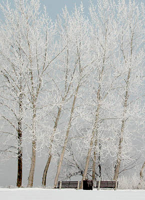 Benches And Hoar Frost Trees Poster