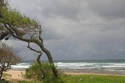 Bending Over Backwards In Barbados Poster by Willie Harper