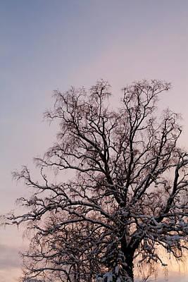Bergen  Winter Tree Poster by Hakon Soreide