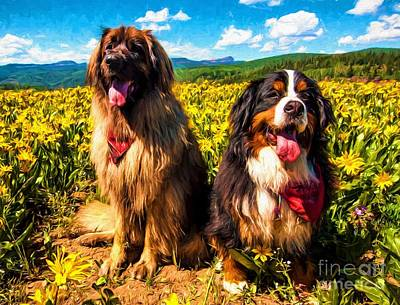 Bernese Mountain Dog And Leonberger Among Wildflowers Poster by Gary Whitton