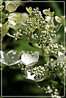 Berries And Blooms In Monochromatic Green Poster