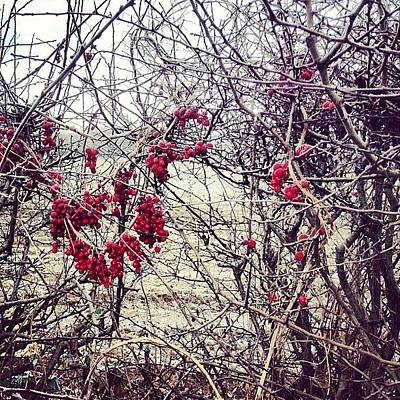 Berries In The Hedgerow Poster
