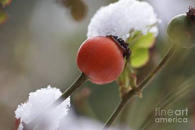 Berry Poster by Carol Lynch