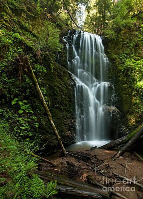 Berry Creek Falls In Big Basin Poster