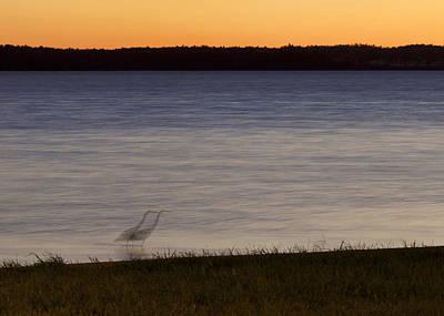 Beside Myself - Great Blue Heron At Sunset Poster by Jane Eleanor Nicholas
