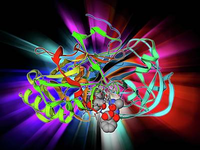 Beta Secretase Enzyme Poster by Laguna Design