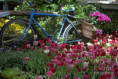 Bicycle In My Garden Poster by Ivete Basso Photography