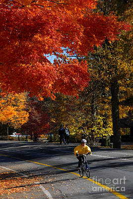 Bicyclist In Park During Autumn Poster