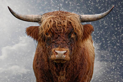 Big Bull Poster by Joachim G Pinkawa