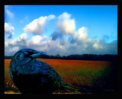 Big Daddy Crow Series Silent Watcher Poster by Lesa Fine