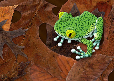 Big-eyed Tree Frog Poster by Stephen Kinsey