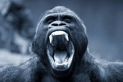 Big Gorilla Yawn Poster