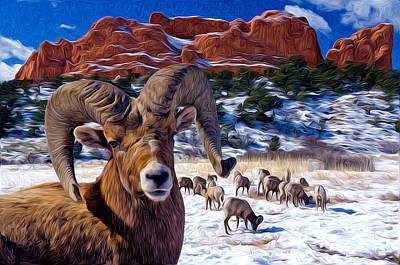 Big Horn Sheep At The Garden Poster