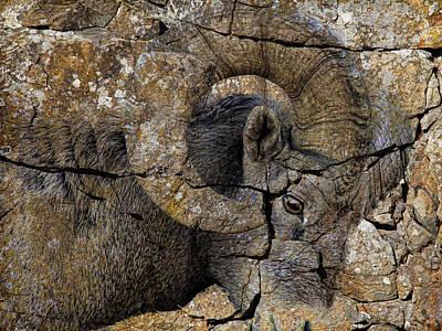 Bighorn Rock Art Poster