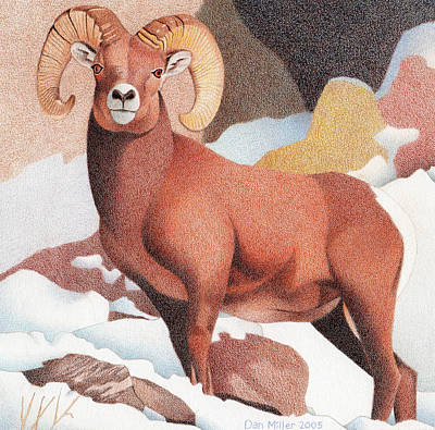 Bighorn Sheep Winter Poster