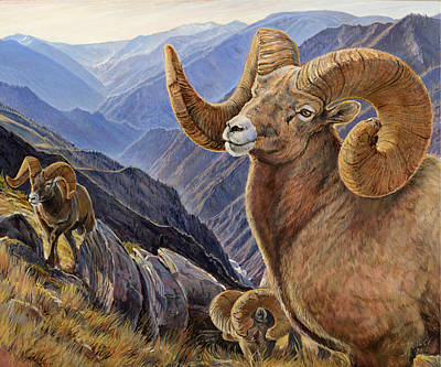 Poster featuring the painting Bighorn Trio by Steve Spencer