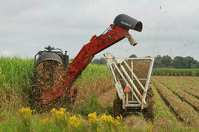 Billet Sugarcane Harvester Poster