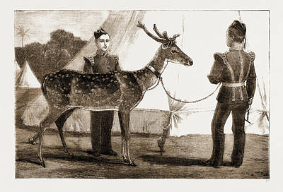 Billy, The Pet Deer Of The Prince Of Waless Own West Poster