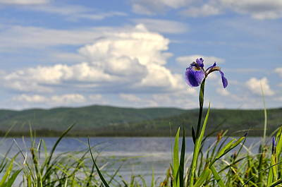 Poster featuring the photograph Birch Lake Iris by Cathy Mahnke