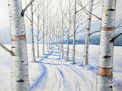 Birch Trees Along The Curvy Road Poster