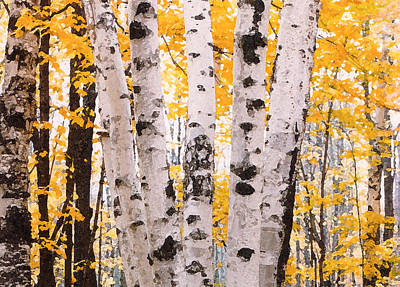Birch Trees In The Fall Poster