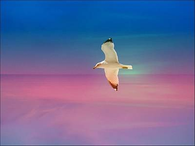 Poster featuring the photograph Bird At Sunset by Athala Carole Bruckner