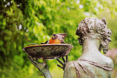 Bird Bath Fountain Poster by Jessica Jenney
