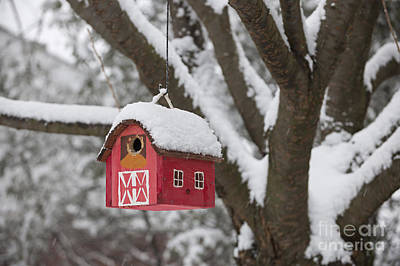 Bird House On Tree In Winter Poster