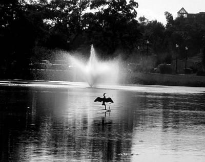 Bird Imitates Fountain Poster