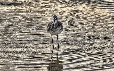 Bird In A Puddle Poster by Michael Thomas
