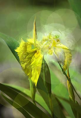Bird Of Iris Poster by Adria Trail