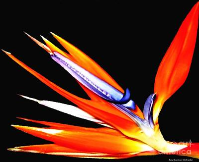 Bird Of Paradise Flower With Oil Painting Effect Poster by Rose Santuci-Sofranko