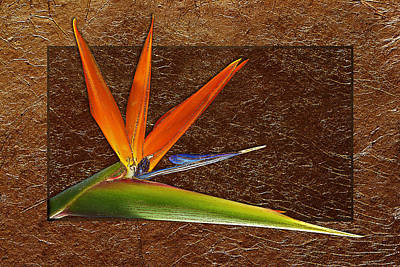 Bird Of Paradise Gold Leaf Poster by Phyllis Denton