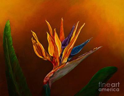 Bird Of Paradise Poster by Zina Stromberg