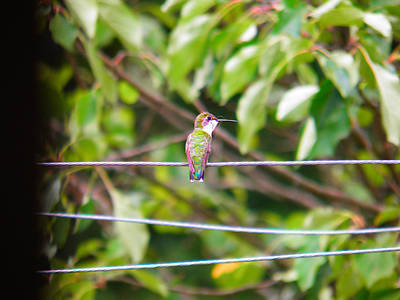 Poster featuring the photograph Bird On A Wire by Nick Kirby