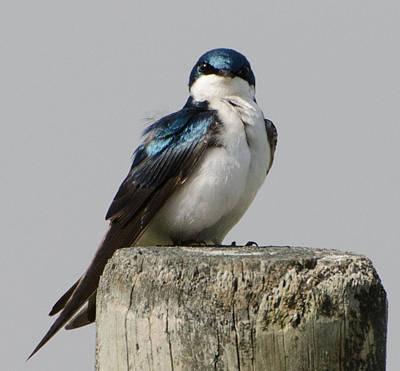 Bird On Post Poster