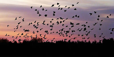 Birds At Sunrise Poster by Aimee L Maher Photography and Art Visit ALMGallerydotcom