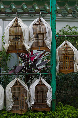Birds In Cages For Sale At A Bird Poster