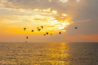 Poster featuring the photograph Birds In Lake Erie Sunset by David Coblitz