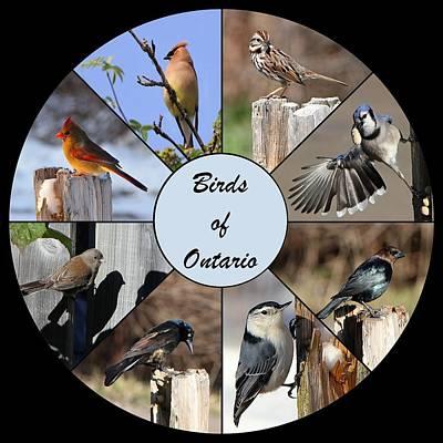 Birds Of Ontario Poster by Davandra Cribbie