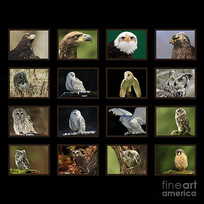 Birds Of Prey Of Canada Poster by Inspired Nature Photography Fine Art Photography