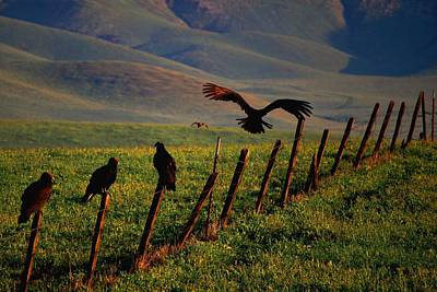 Poster featuring the photograph Birds On A Fence by Matt Harang
