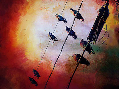 Poster featuring the photograph Birds On A Wire by Micki Findlay