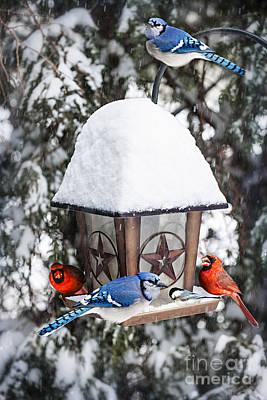 Birds On Bird Feeder In Winter Poster by Elena Elisseeva