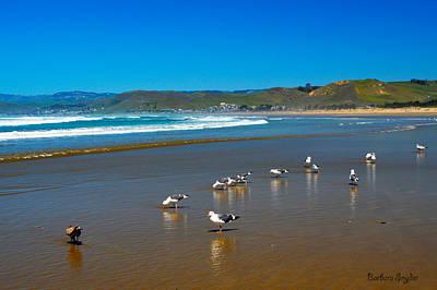 Birds On The Beach Morro Bay California Poster by Barbara Snyder